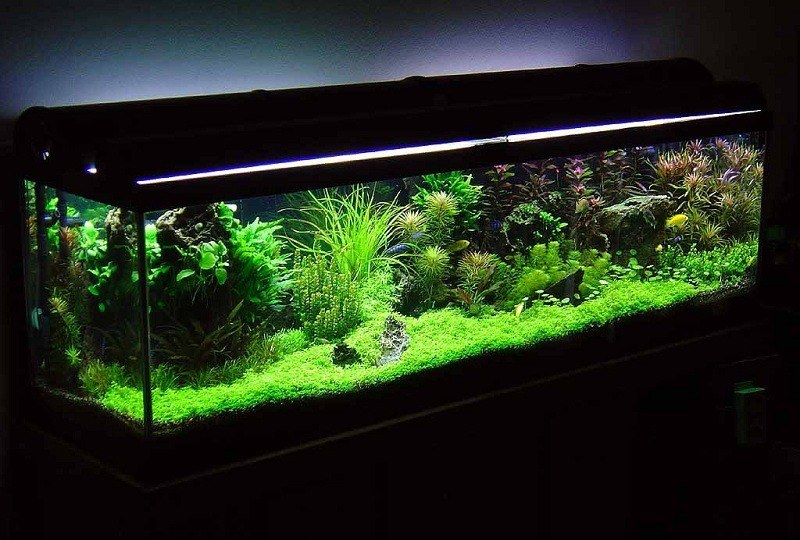 Best betta tank 2017 buyer 39 s guide how to set it up for Best fish tanks