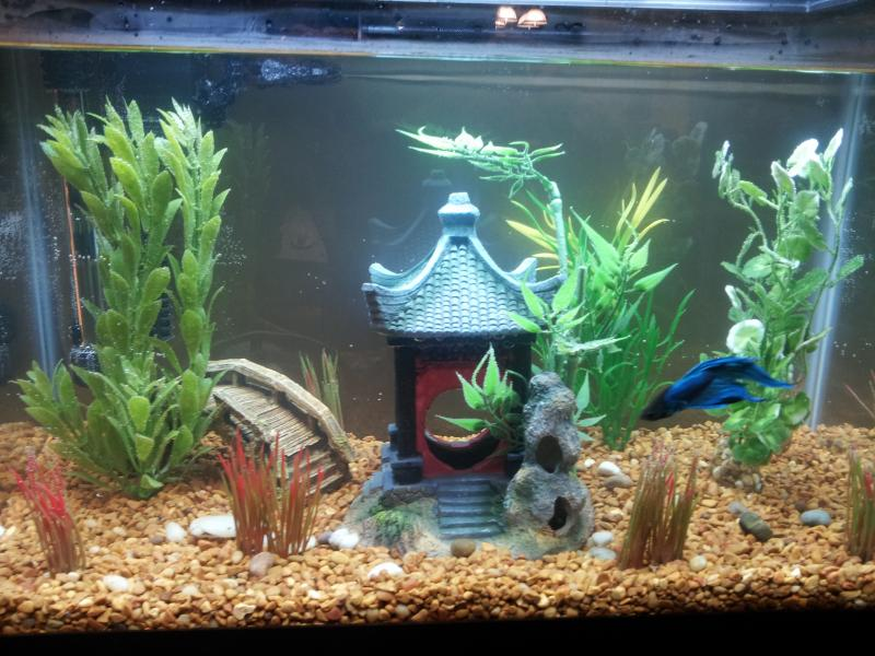 Best betta tank 2017 buyer 39 s guide how to set it up for Do betta fish sleep