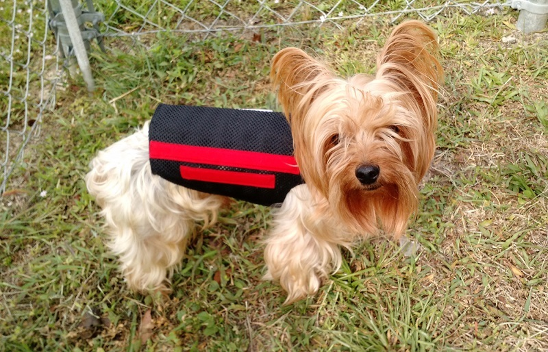 The-Wiggleless-Dog-Back-Brace-Review-3