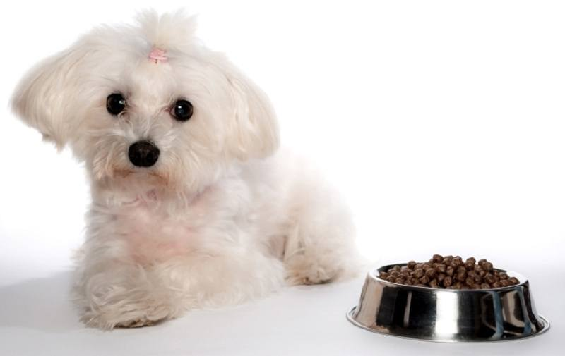 best-dog-food-for-Shih-Tzu-Maltese-and-French-Bulldogs-15