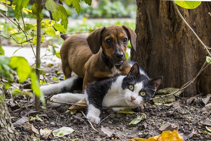 Cats-and-Dogs-Can-Get-Along-1