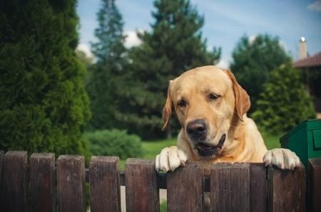 dog-wood-fence (1)
