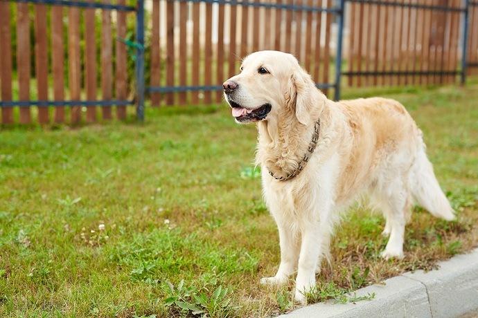 dog-wood-fence