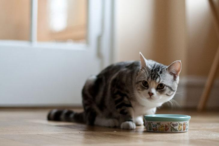 cat food with high fiber content