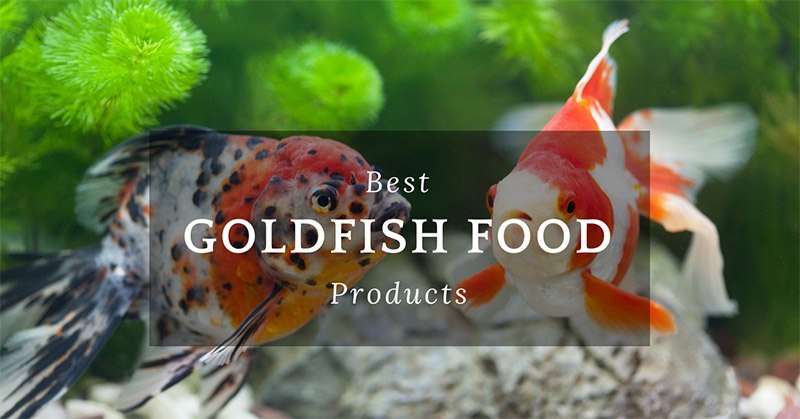 Best Goldfish Food