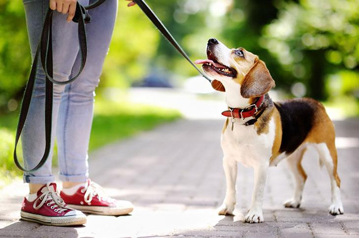 best dog collars for training