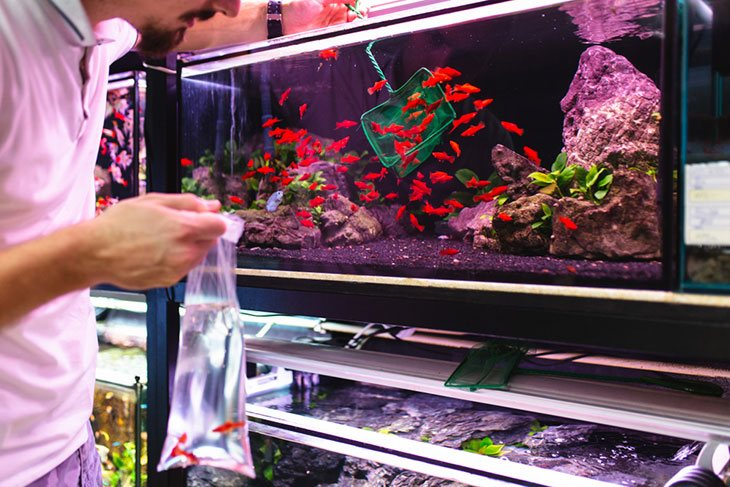 fish and aquarium shops near me