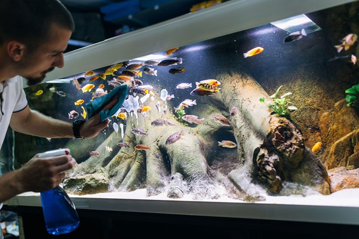aquarium accessories shop near me