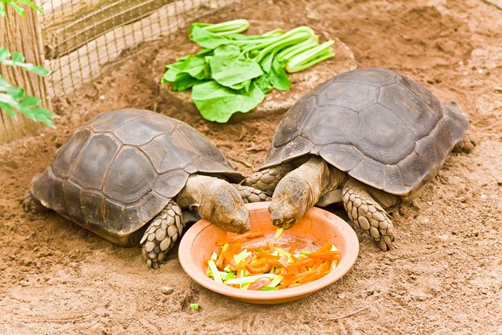 what do turtles eat as pets