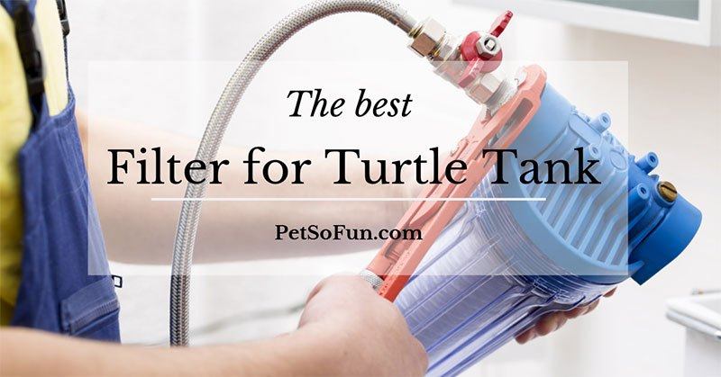 best filter for turtle tank