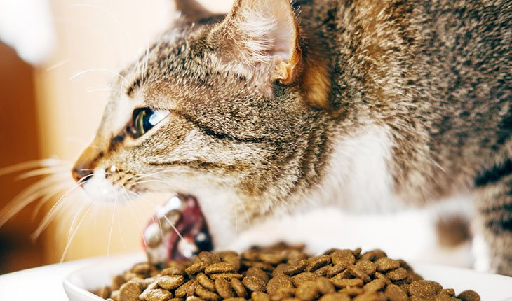 Best Cat Food To Prevent Vomiting 2019 Don T Buy Before
