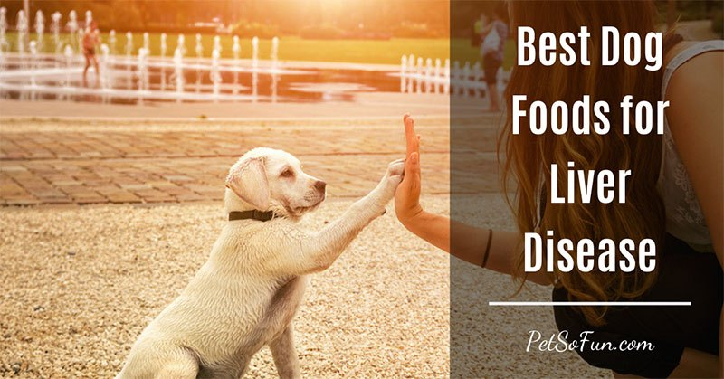 best dog foods for liver disease