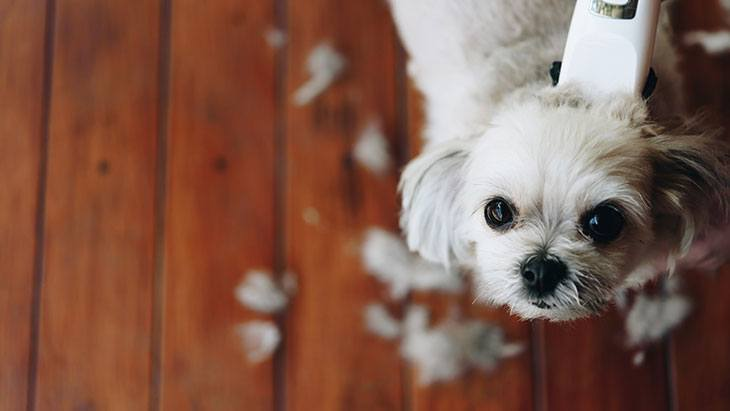 best pet clippers for shih tzu