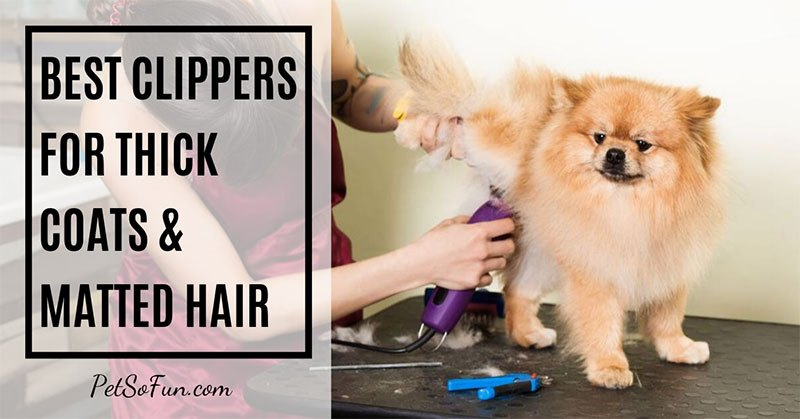 best dog clippers for thick coats and matted hair