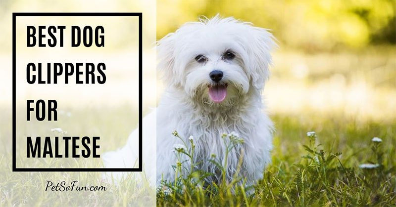 best dog clippers for maltese