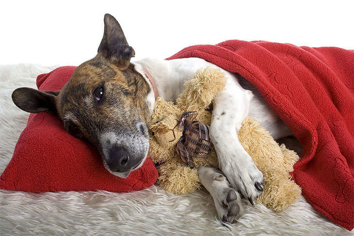 best over the counter dog food for kidney disease