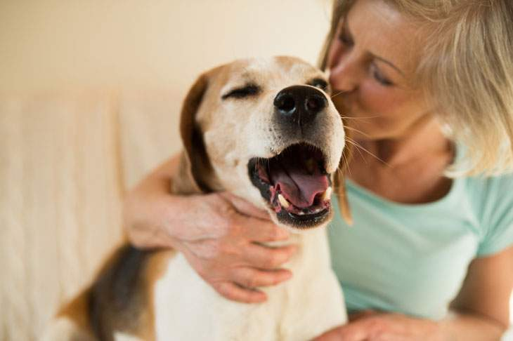 how to keep your dog calm while grooming