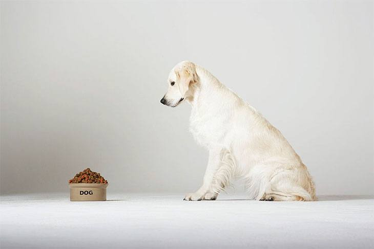 best dry dog food for dogs with autoimmune disease