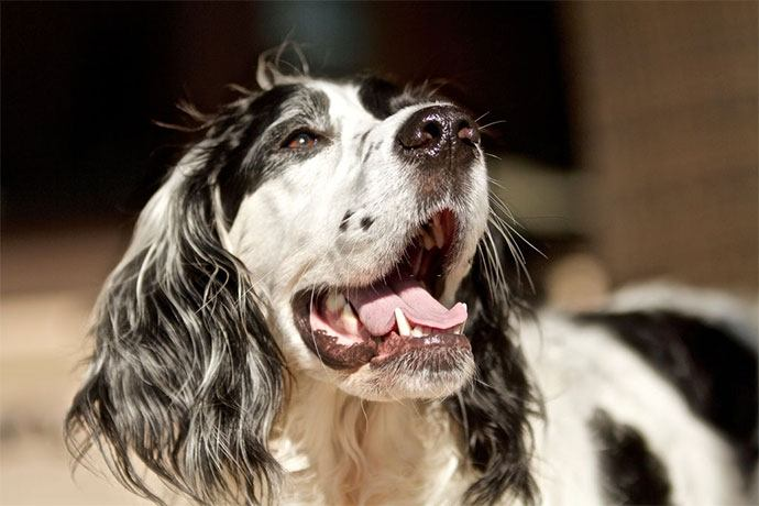 best dry dog food for bad breath