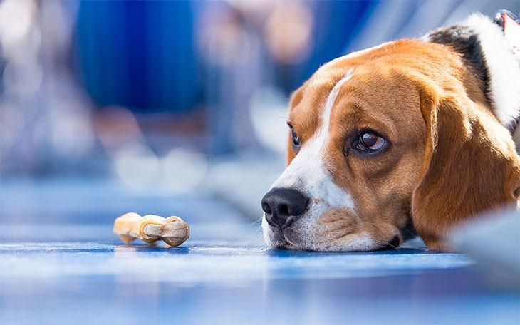 best dog food for dogs with autoimmune disease