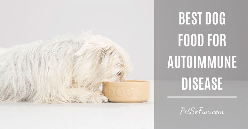 best dog food for autoimmune disease