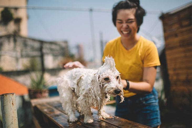 best dog shampoo for dry skin and itching