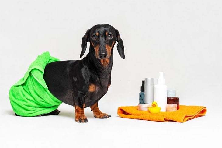 best dry shampoo for dogs with sensitive skin