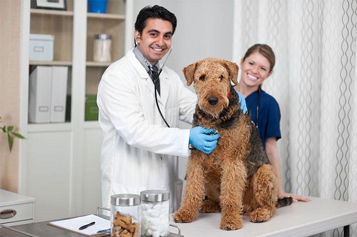good dog food for congestive heart failure
