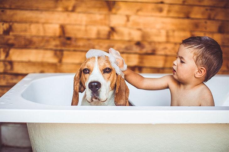 best shampoo dogs itchy skin