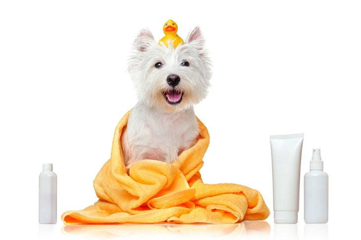best shampoo for dogs dry itchy skin