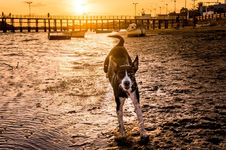 the best hip and joint supplement for dogs