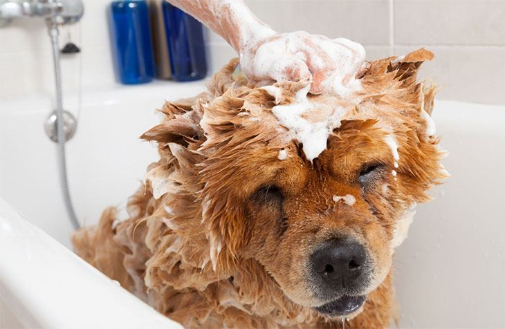 best antifungal antibacterial dog shampoo