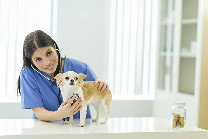 best canned dog food for congestive heart failure