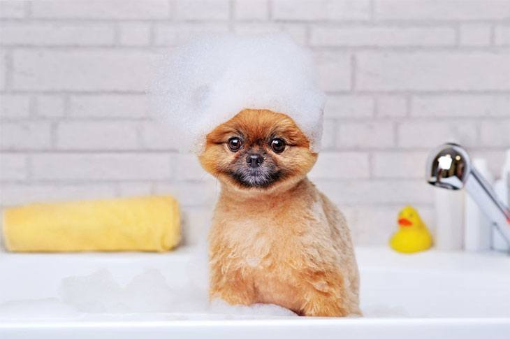 best shampoo for shih tzu puppies