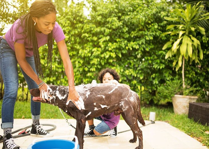 best antifungal dog shampoo for yeast