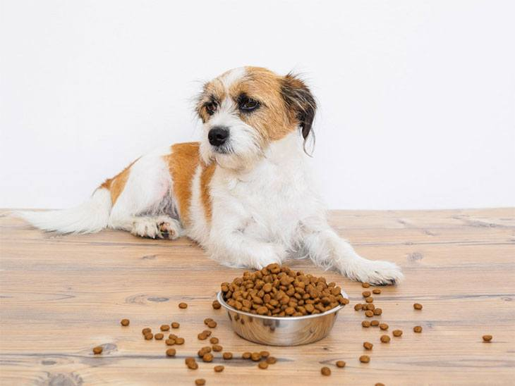 best wet dog food for congestive heart failure