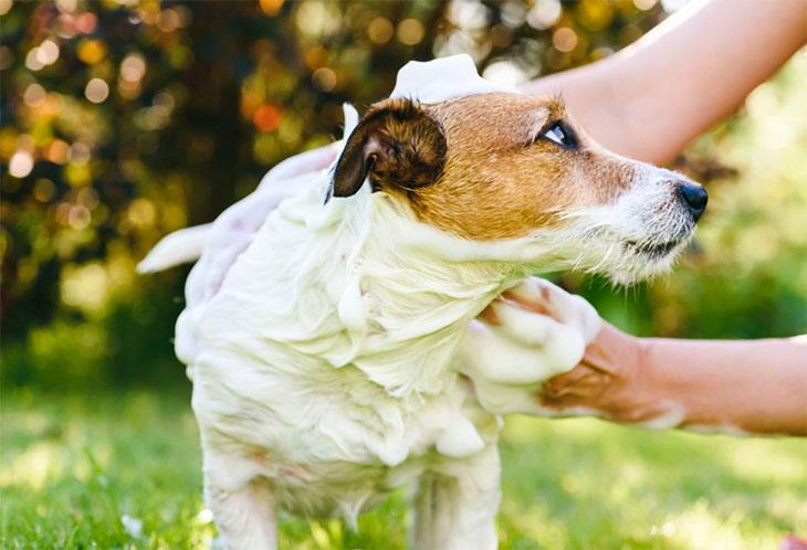 best smelling dry shampoo for dogs