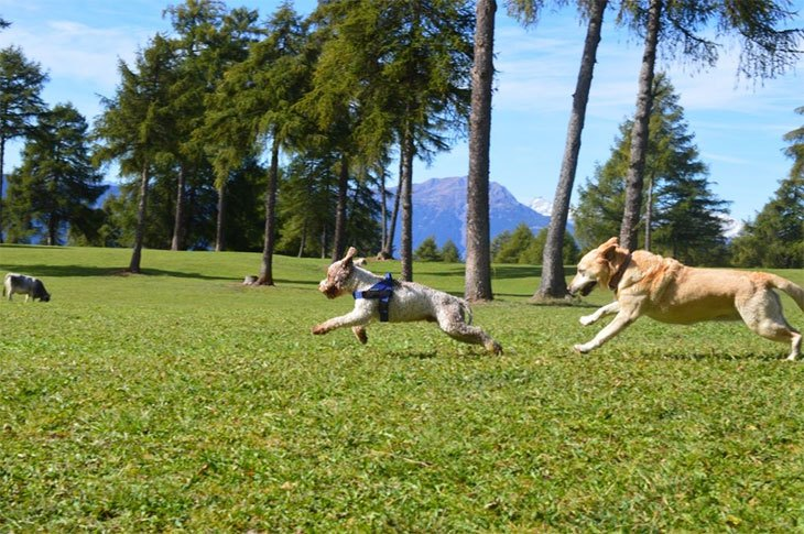 best joint supplement for dogs reviews