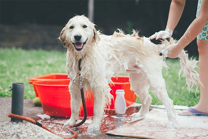 the best shampoo for dogs with itchy skin