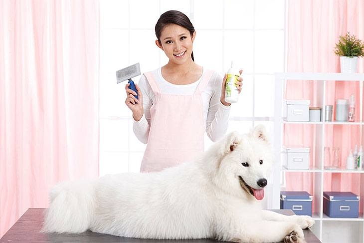 best yeast dog shampoo